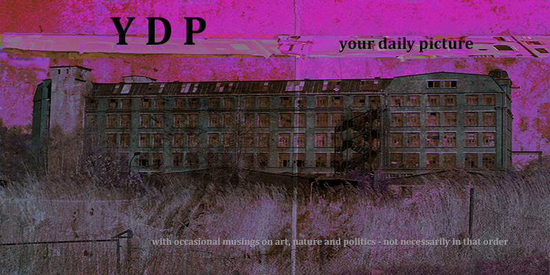 YDP – your daily picture